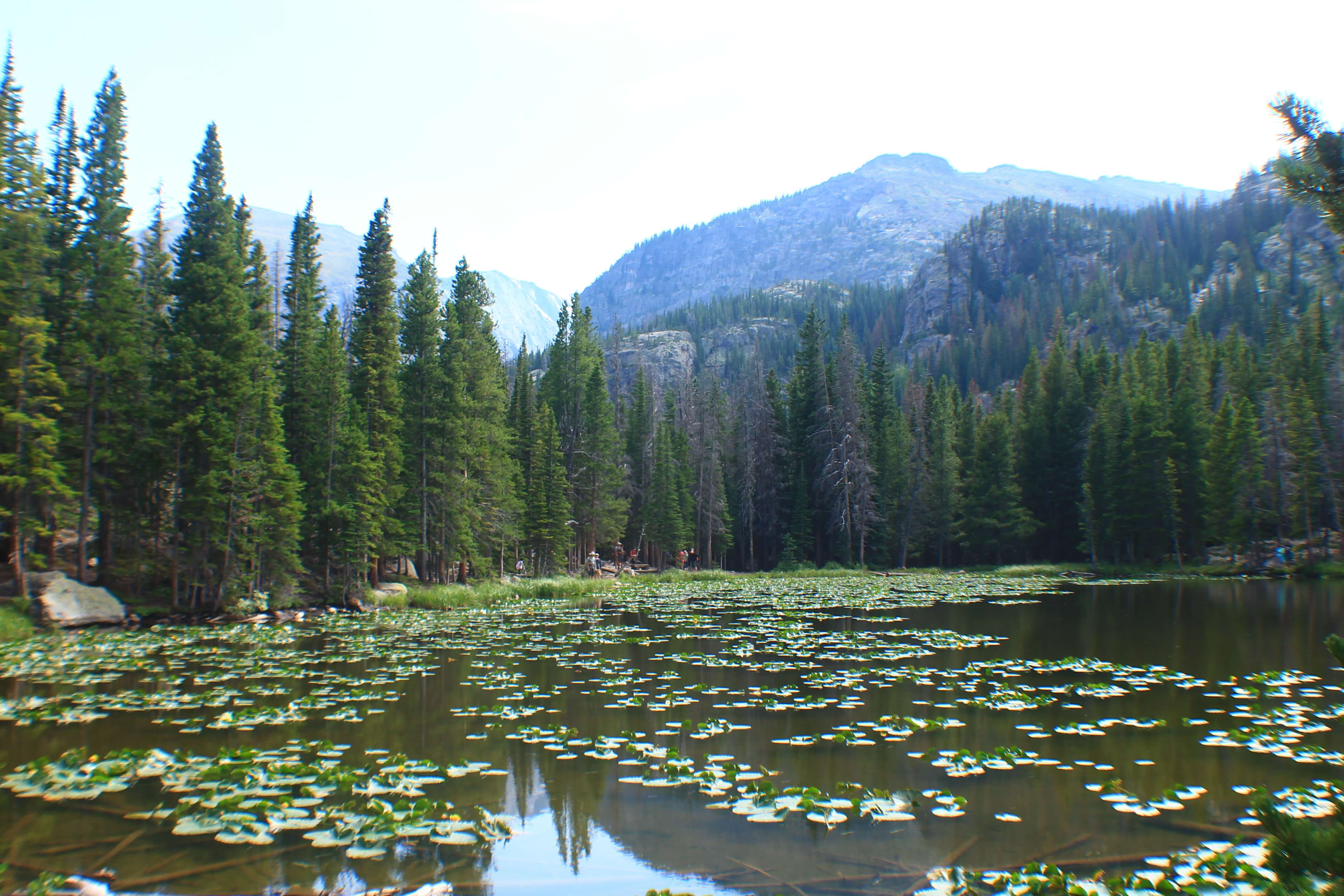 Nymph Lake, Best Day Hikes from Bear Lake in Rocky Mountain National Park + Camping Tips