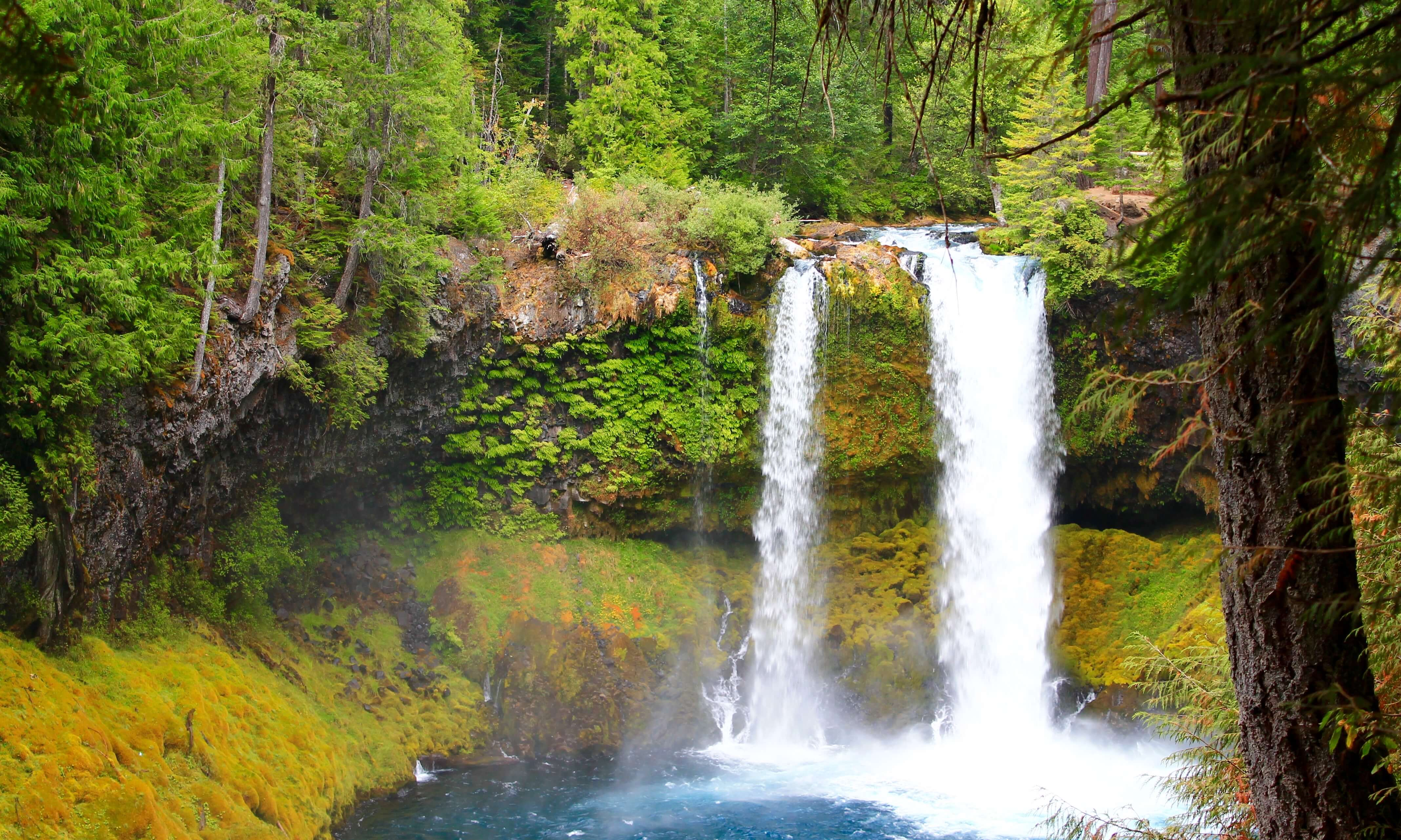 Best Oregon Campgrounds- Mackenzie River area